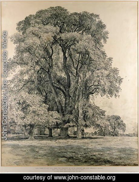 John Constable - Elm trees in Old Hall Park, East Bergholt, 1817