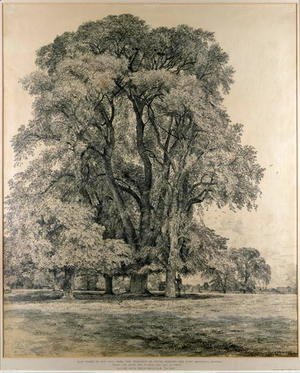 Elm trees in Old Hall Park, East Bergholt, 1817
