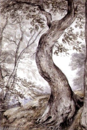 John Constable - Tree at Helmingham, c.1800