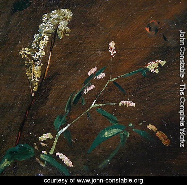 Flower Studies: Persicaria and Meadowsweet