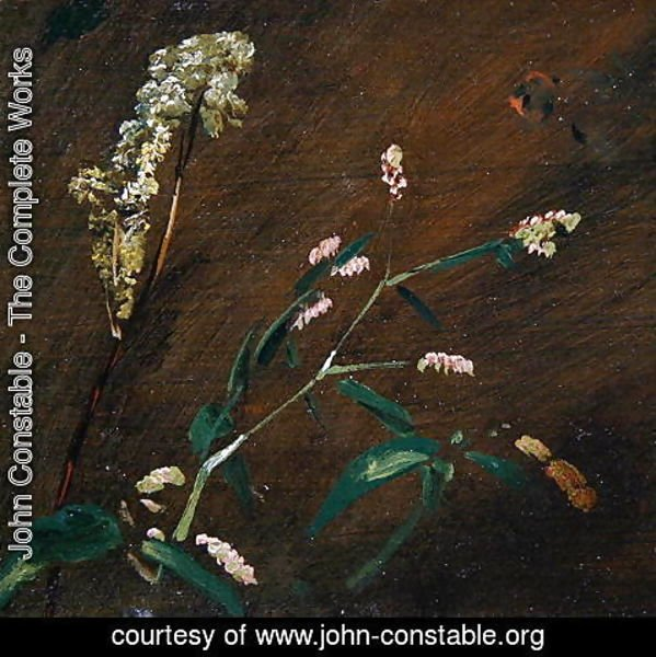 John Constable - Flower Studies: Persicaria and Meadowsweet