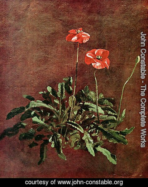John Constable - Studies of poppies