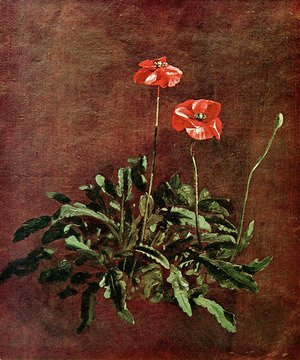 Studies of poppies